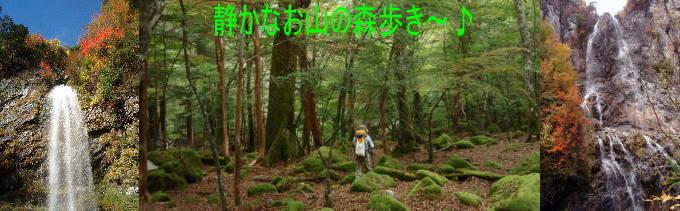 静かなお山の森歩き〜♪